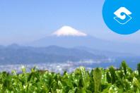 About Shizuoka-shi